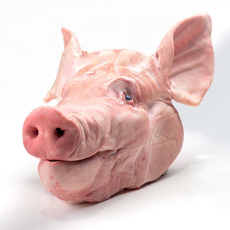 Granjero Feliz lideres en la comercializacion de carne de puerco cerdo  Cabeza sin papada